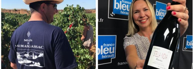 Vendanges 2017 à Daumas Gassac et cuvée Cassiopée de Stella Nova présentée par Patricia Huczek sur France Bleu Hérault - Blog Trinquefougasse