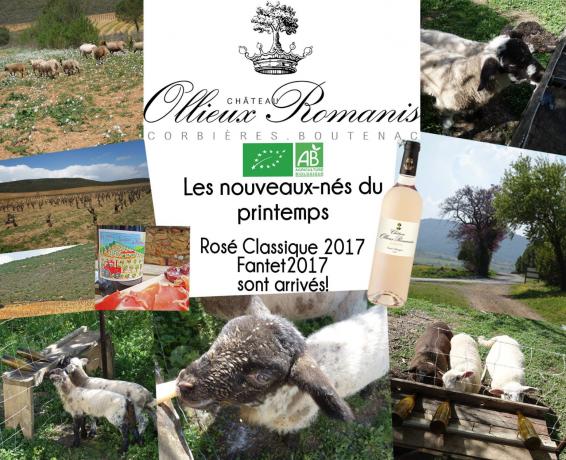 Ollieux Romanis nouveautés 2018