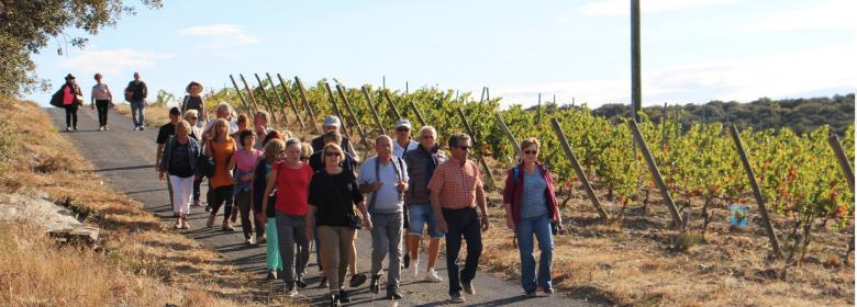 Famille vigneronne en faugérois - saoût 2018