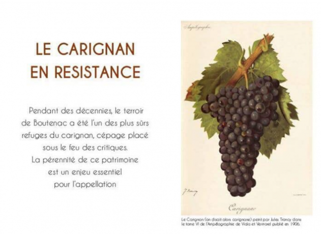 Le Carignan en Résistance - cru Boutenac - Marc Médevielle - chronique
