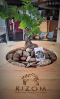 RIZOM - une table connectée et végétalisée sur la terrasse O'Sud - août 2020