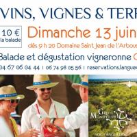 Vins, vignes et terroir en Grés de Montpellier
