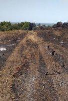 Incendie du 14 juillet 2020 au Mas de mon Père - Frédéric Palacios