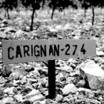 Carignan day 2015 chez Trinque Fougasse
