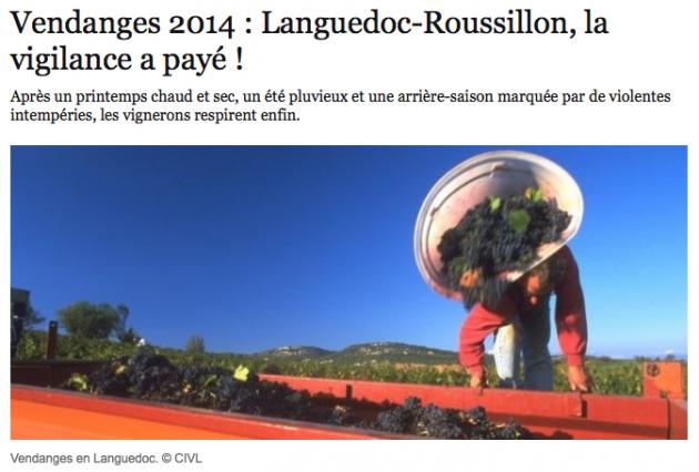 Article Olivier Bompas pour Le Point 15 octobre 2014 - Vendanges en Languedoc : la vigilance a payé