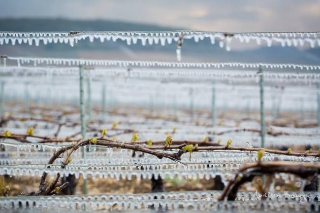 Bougies dans le vignoble de Chablis - lutte contre le gel - Blog Trinque Fougasse - photos Aurélien Ibanez © Aurélien Ibanez