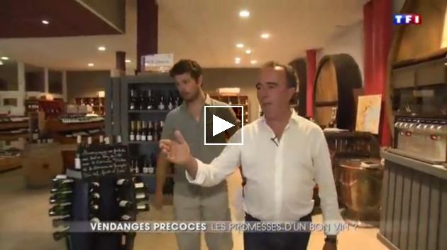 """Journal de TF1 : """"Les vendanges précoces : promesses d'un bon vin ?"""" - J.-Philippe Granier"""