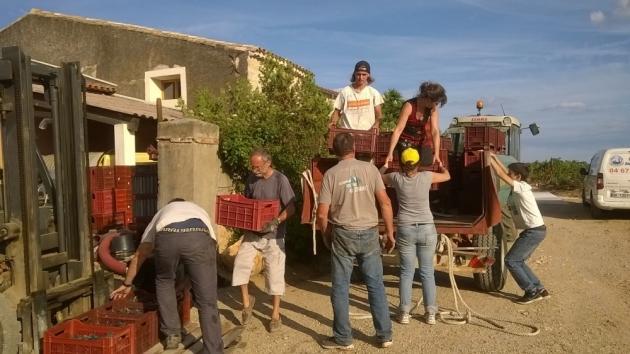 La huppe de Monplézy - vendanges 2016