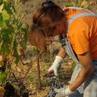 Mardi vigneron 18 janvier : La Jasse Castel