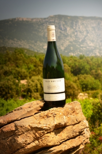 Mas Brunet - vins - Languedoc