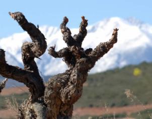 Roussillon - Conseil Interprofessionnel edes vins