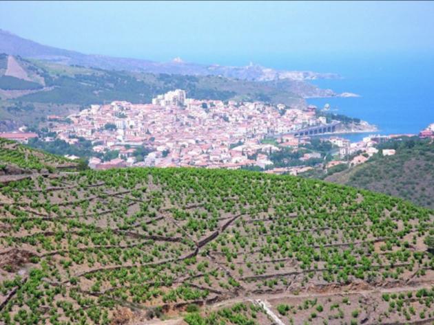 Roussillon vignoble