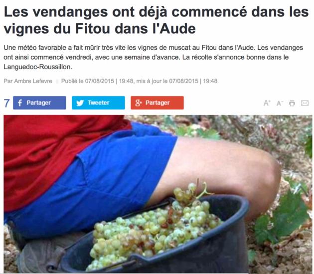 Vendanges précoces à Fitou dans l'Aude - France 3 - 10 aout 2015