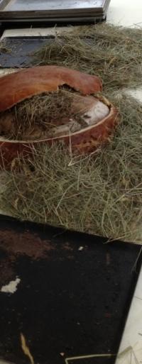 Vignes Buissonnières 2012 - jambon cuit au foin