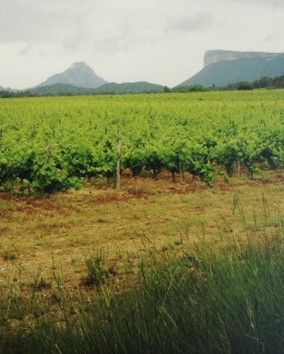 Vignes Buissonnières 2012 - Le Pic Saint Loup & les vignes