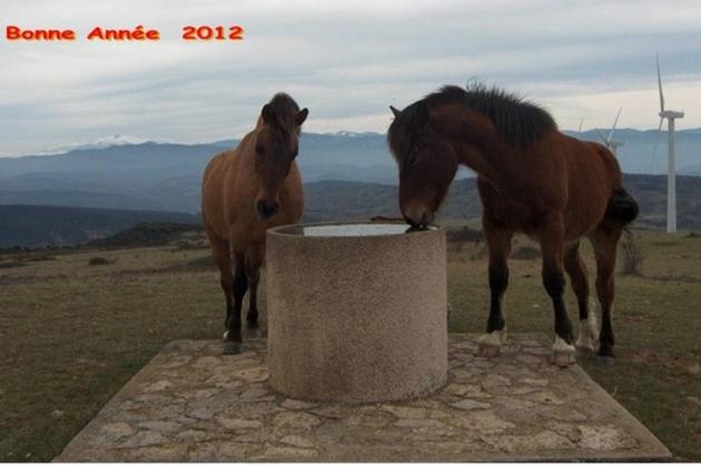 Voeux MOUSCAILLO 2012